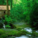 image maison verte
